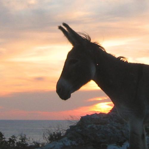 zeilvakantie kroatie ezel
